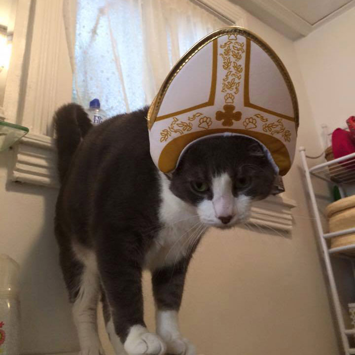 pope-cat-kevin