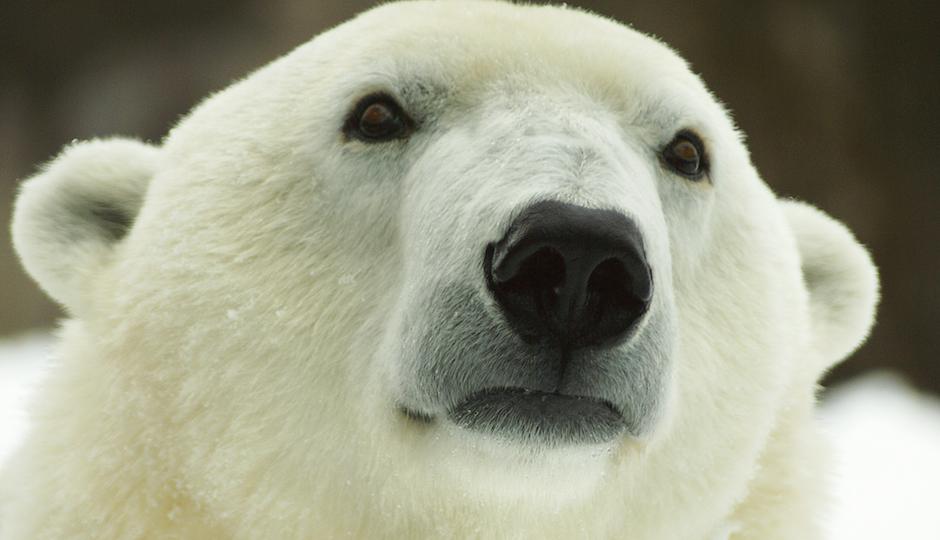 Photo courtesy of Philadelphia Zoo.