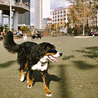 Schuylkill River Dog Park | Photo by Jauhien Sasnou