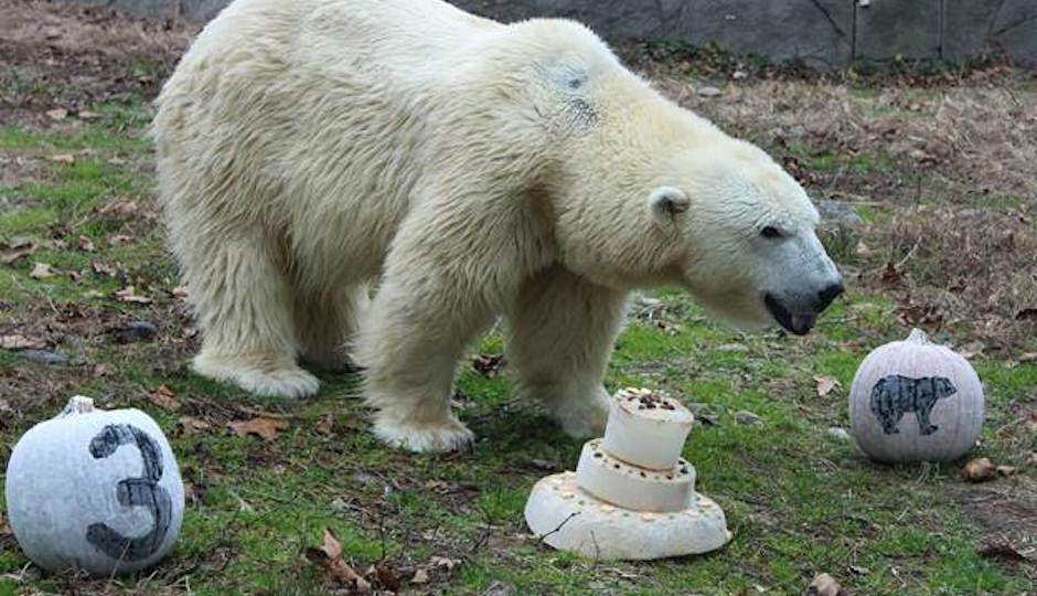 Courtesy of Philadelphia Zoo