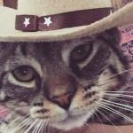 Beef rocking the latest trend in feline hats.