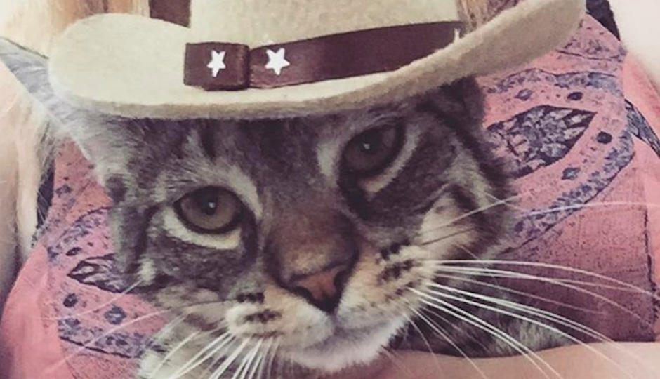 Beef rocking the latest trend in feline hats.
