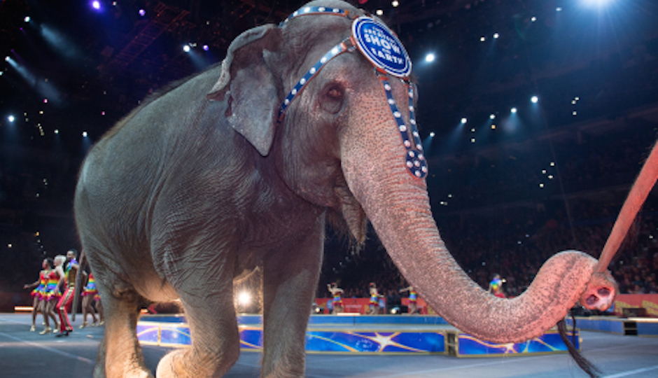 Say goodbye to the elephants of the Ringling Bros. Circus. (Photo via Feld Entertainment)