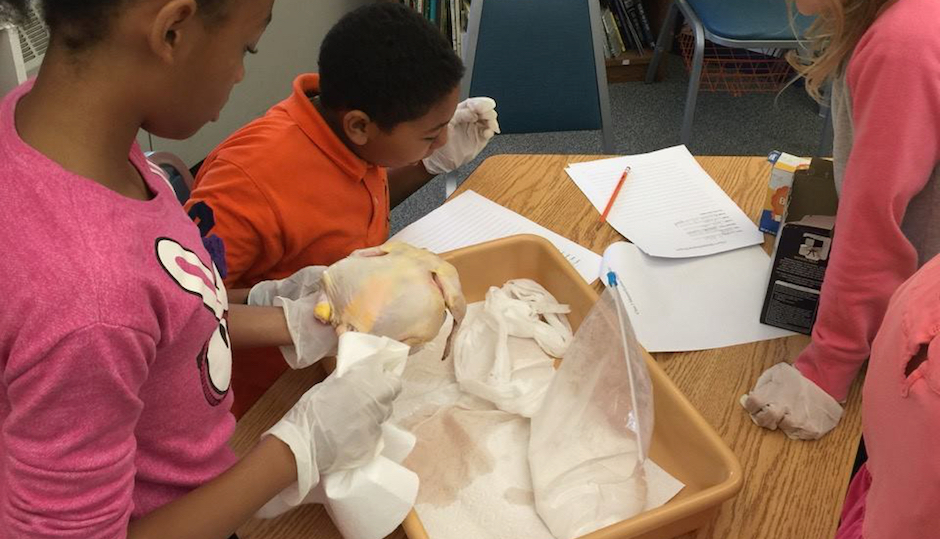 Students making chicken mummies. (Photo via Facebook)