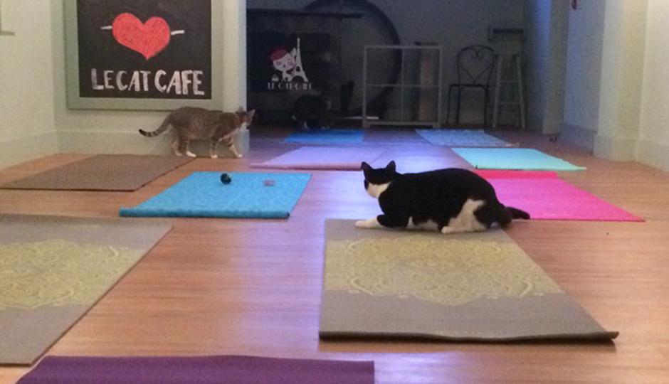Cats & Mats Yoga at Le Cat Café | Photo courtesy Katharine Livingston