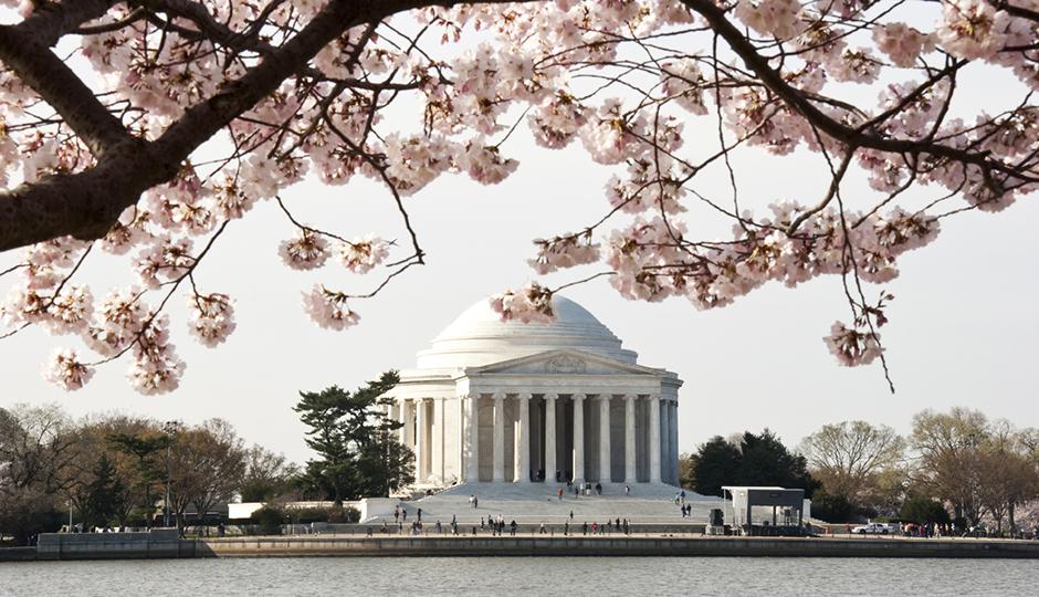 Cherry blossoms make every photo better. | Photo credit: iStock/RobertDodge