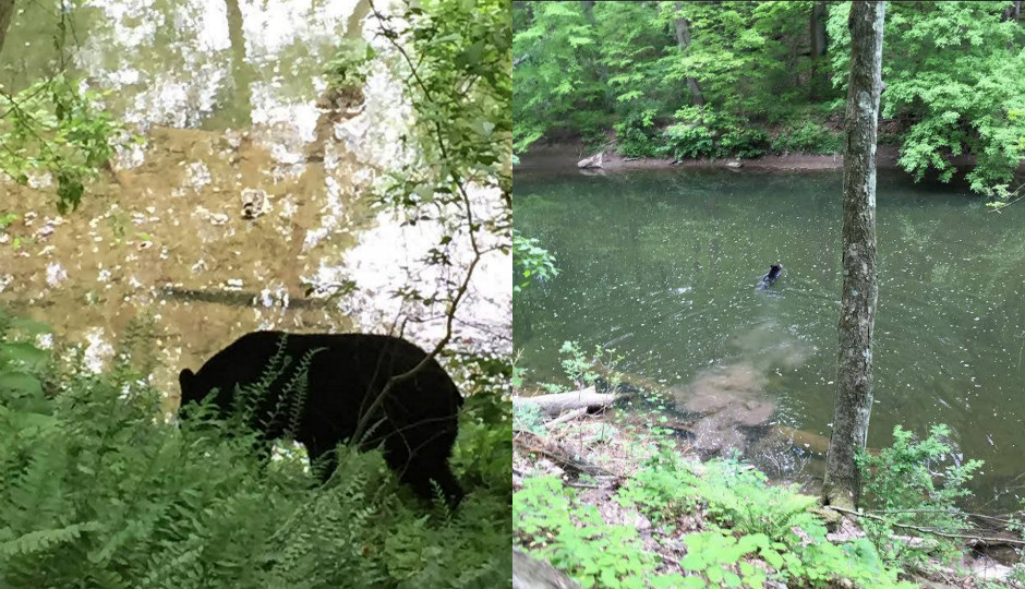 Photo courtesy of the Friends of the Wissahickon Facebook