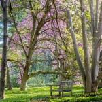 The Barnes Arboretum | Photo by Rob Cardillo
