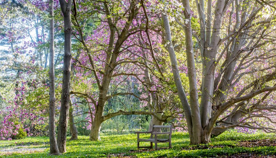 The Barnes Arboretum Photo By Rob Cardillo