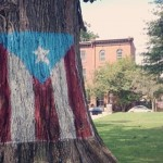 """The Puerto Rican Tree,"" as residents and Parks & Rec workers refer to it,  in Norris Square Park. Photo 
