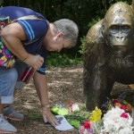 Eula Ray, of Hamilton, whose son is a curator for the zoo, touches a sympathy card beside a gorilla statue outside the Gorilla World exhibit at the Cincinnati Zoo & Botanical Garden, Sunday, May 29, 2016, in Cincinnati. On Saturday, a special zoo response team shot and killed Harambe, a 17-year-old gorilla, that grabbed and dragged a 4-year-old boy who fell into the gorilla exhibit moat. Authorities said the boy is expected to recover. He was taken to Cincinnati Children's Hospital Medical Center. (AP Photo/John Minchillo)