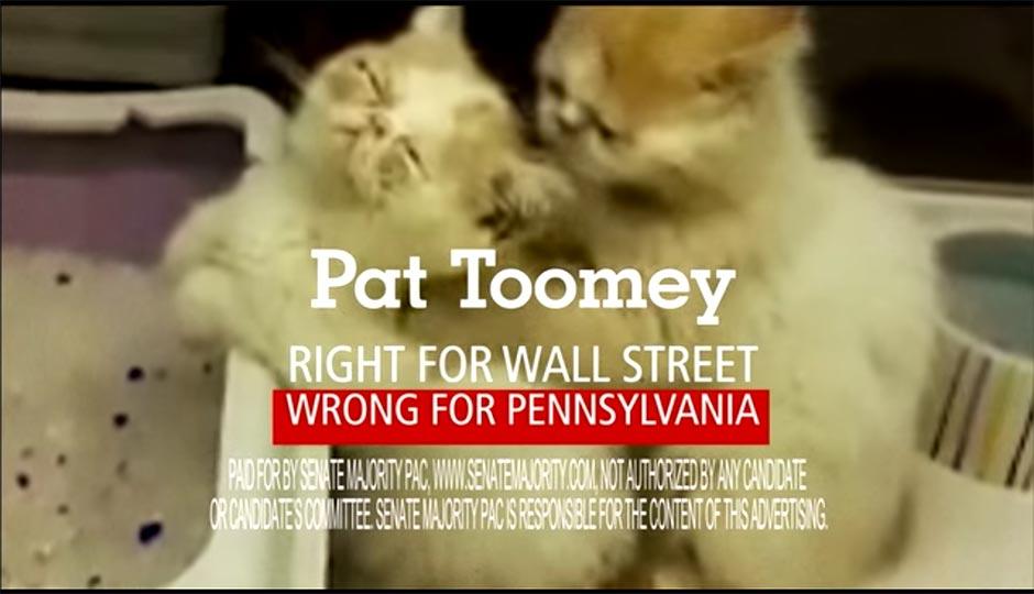 Pat Toomey Kittens
