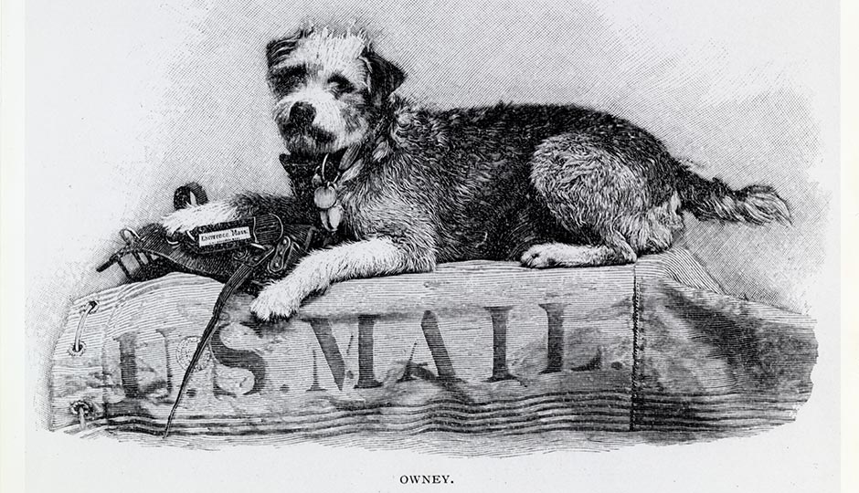 Owney, the unofficial mascot of the Railway Mail Service in the 1890s. Public Domain