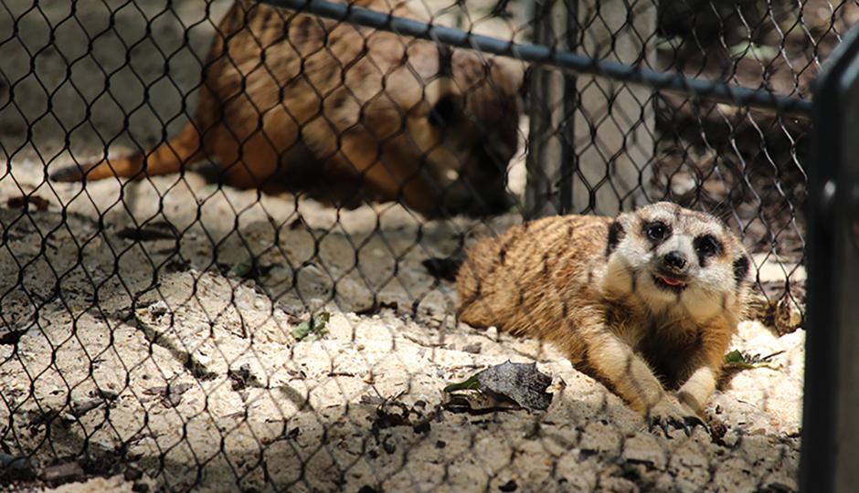 Photo via Philadelphia Zoo