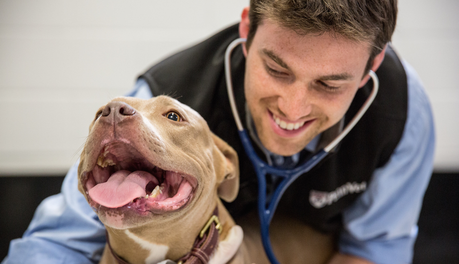 Clint Kuban examines a patient at Penn Vet. | Photo by X
