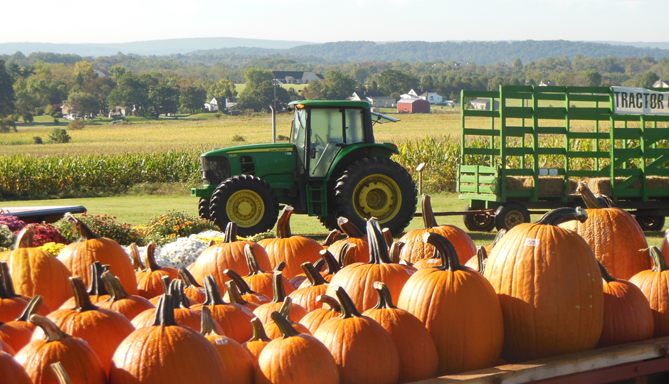 Pumpkins and hayrides at Wilcox Farms in Boyertown |Photograph by Steve Schultz