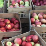 wenk apples martha 940