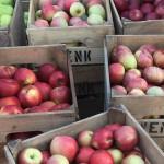 wenk apples martha 940