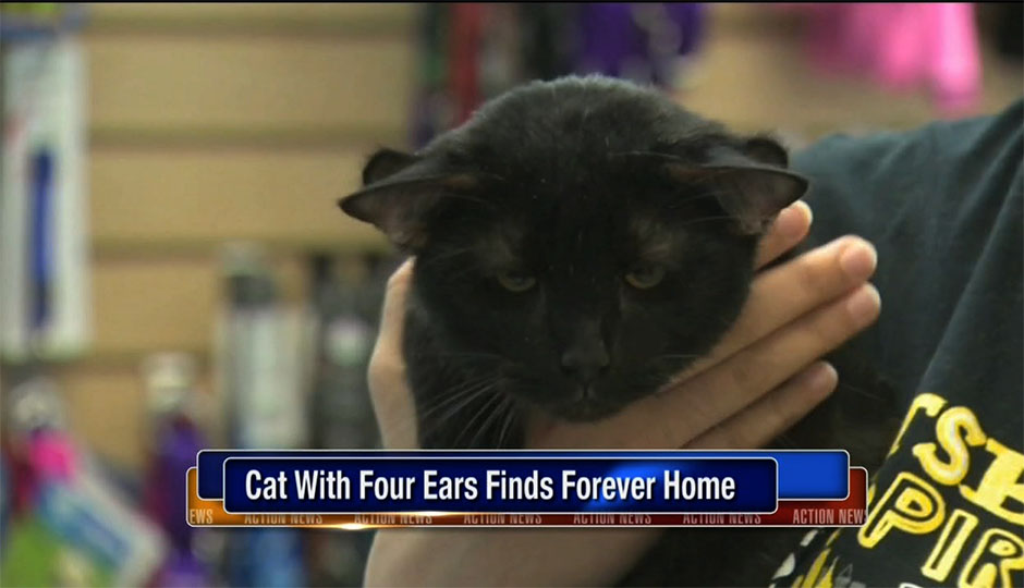 6abc-four-eared-cat2