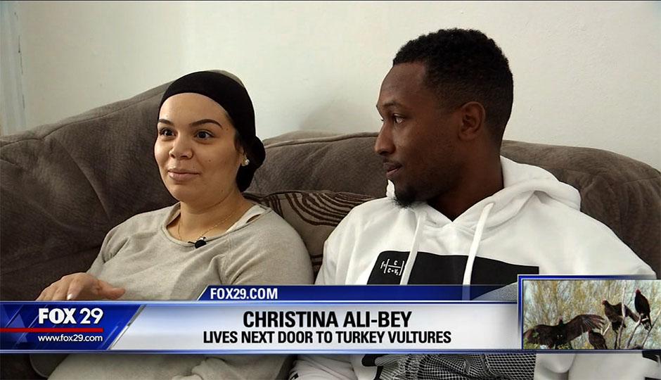 fox29-lives-next-to-turkey-vultures