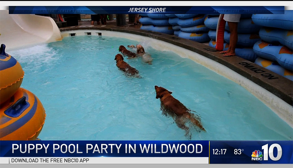 puppy-pool-party