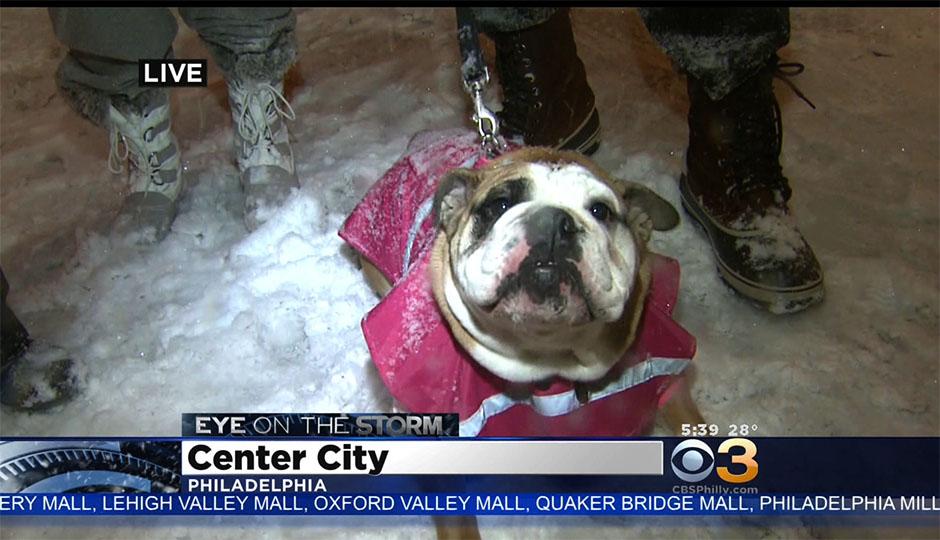 snow-dogs-cbs3