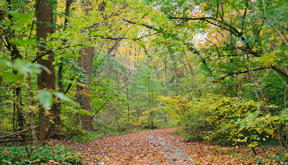 Wissahickon Valley | By InSapphoWeTrust from Los Angeles, California, USA (Wissahickon Valley, Chestnut Hill, Philadelphia) [CC BY-SA 2.0 (http://creativecommons.org/licenses/by-sa/2.0)], via Wikimedia Commons