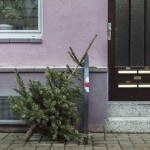 Weihnachtsbaum nach dem Fest steht vor rosa Haus zum Recycling