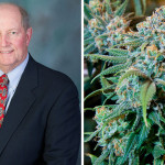Rep. Barry J. Jozwiak / marijuana plant