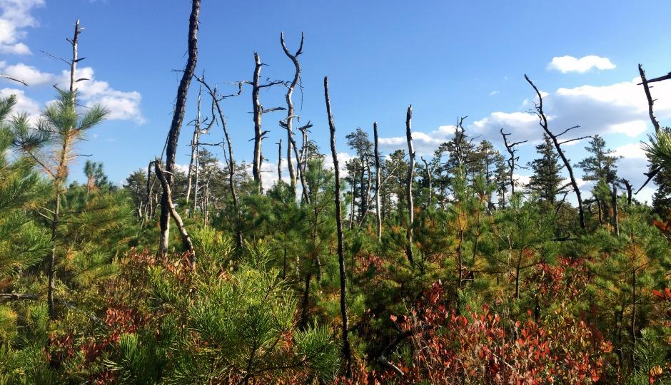 pine-barrens-940x540