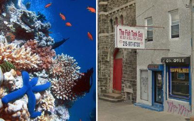 Great Barrier Reef / Fish Tank Guy