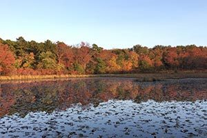 5 Gorgeous Philly-Area Hikes to See Fall Foliage