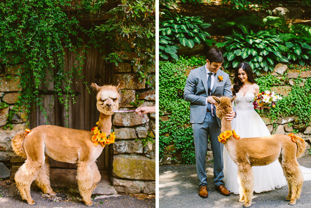 A Baby Alpaca Makes for the Cutest Guest at This Summer Wedding