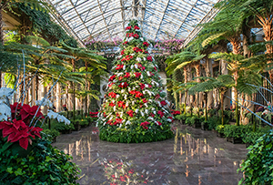 12 Reasons A Longwood Christmas Should Be #1 on Your Holiday To-Do List