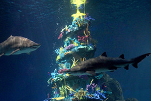 A Parent's Guide to Adventure Aquarium's Christmas Underwater