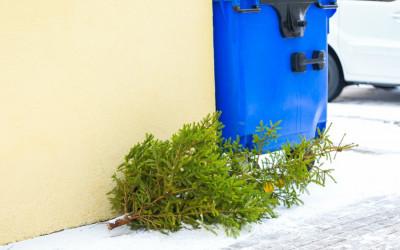 christmas tree, curb