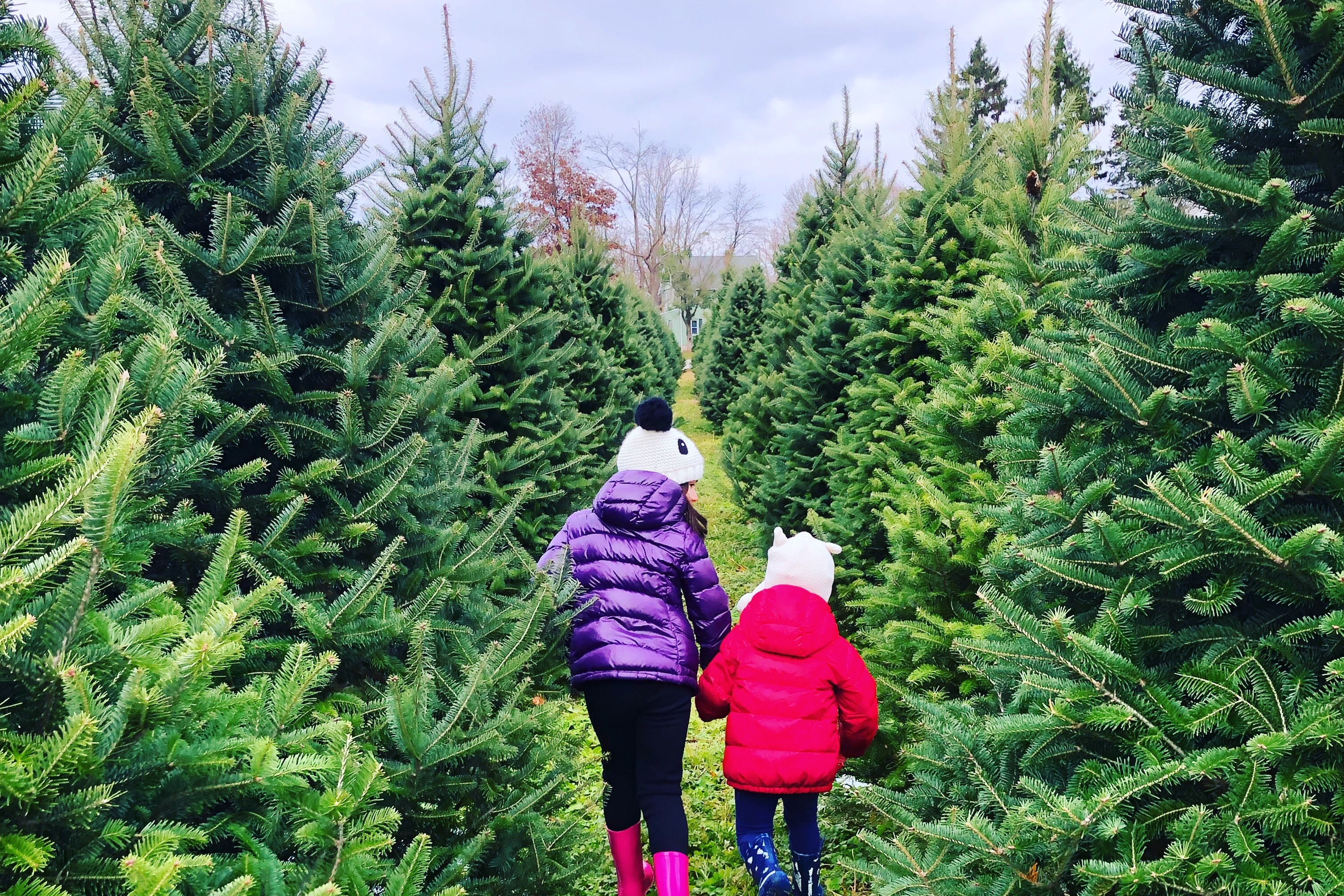 Cut Your Own Christmas Tree Near Me.20 Christmas Tree Farms Near Philadelphia Where You Can Buy