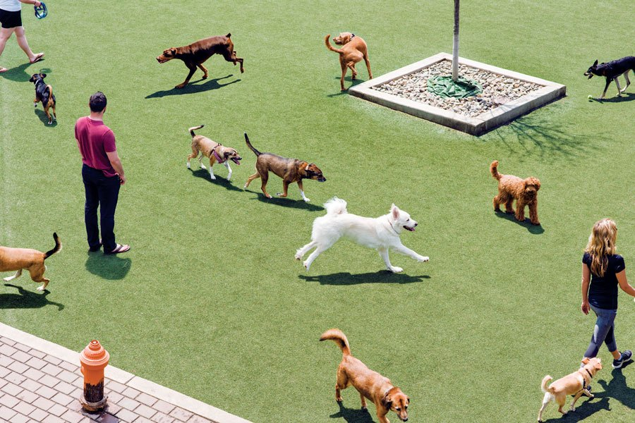 The Ulimate Guide To The Best Dog Parks In Philadelphia