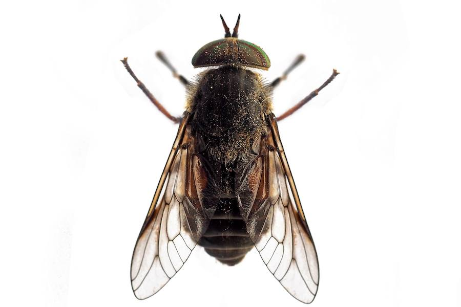 New Biting Flies at the Jersey Shore May Be Caused by Global