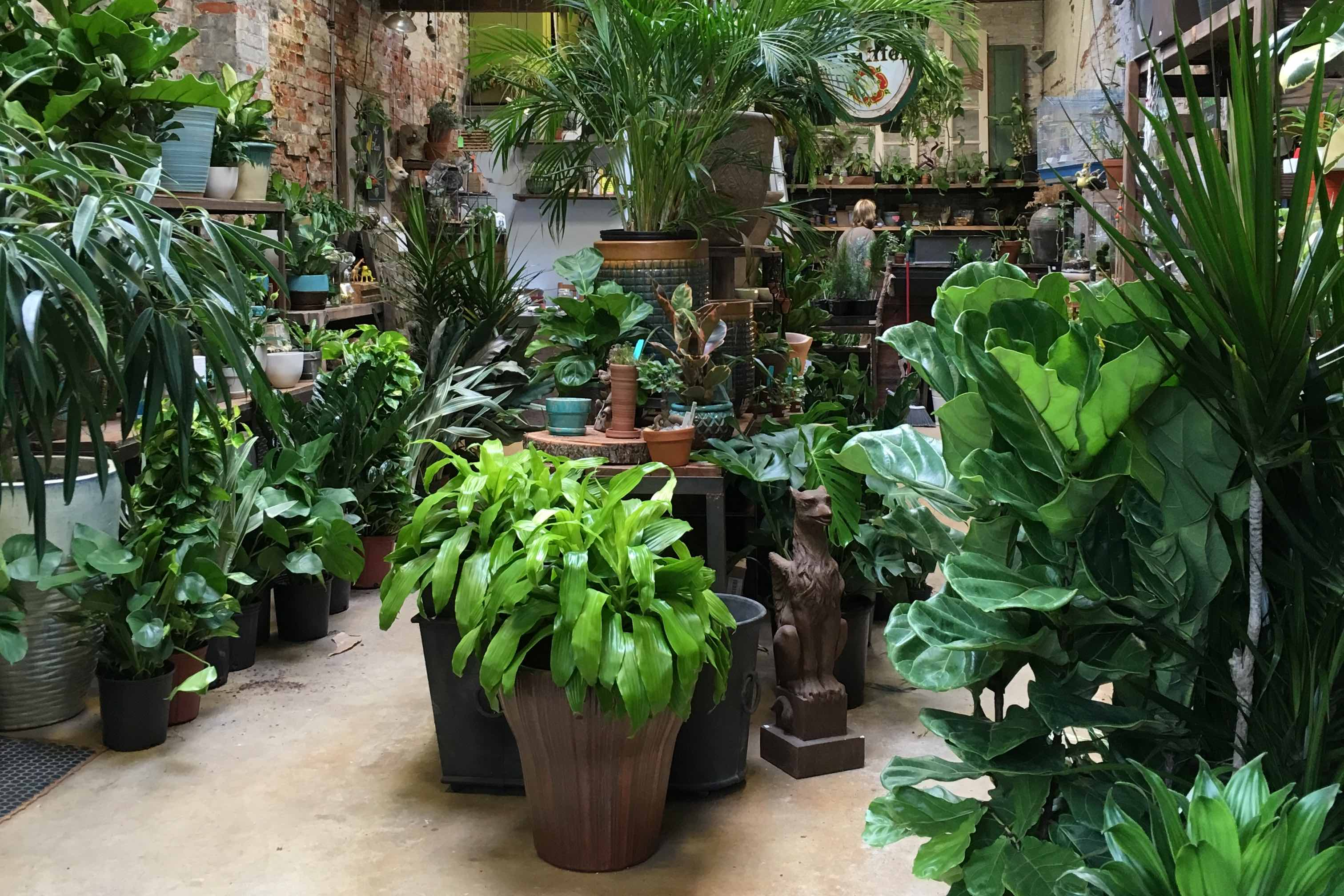 How to Make Your House Plants Survive in Your Philly Rowhouse